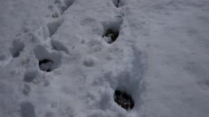 積雪の薄くなった箇所